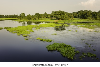 Majuli, Assam, India. A fresh water lagoon with water hyacinth and flanked by fields and trees at sunset on the island of Majuli, Assam, India.