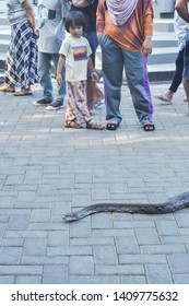Makassar, Indonesia - November 1, 2015: A girl watches a snake creeping on the ground during car free day event at Losari Beach.