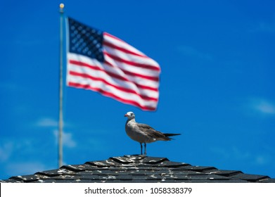 make america great again seagull