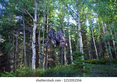 Make shift Bear bag hanging in tree. Camping Safety in the Colorado Mountains