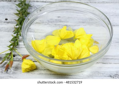Making Bach flower remedies, Oenothera biennis, evening star, natural method of healing