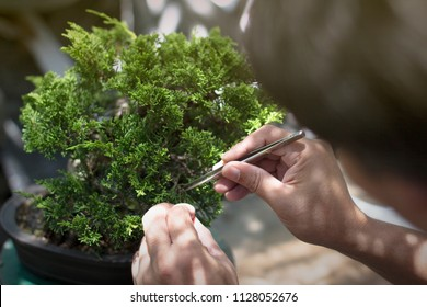 Making of bonsai trees. Handmade accessories wire and scissor bonsai, bonsai tools, stand of bonsai.