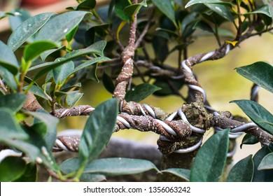 Making of bonsai trees. Handmade accessories wire and scissor bonsai, bonsai tools, stand of bonsai. - Image
