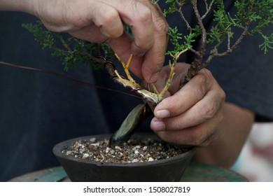 Making of bonsai trees, Handmade accessories wire and scissor bonsai tools, stand of bonsai, Concept Bonsai tree.