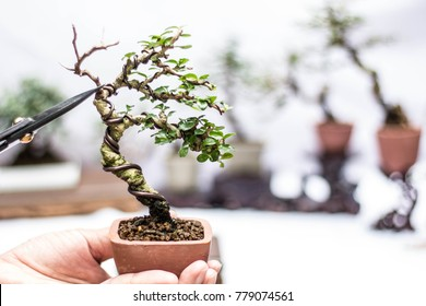 Japanese Bonsai Scissors Images Stock Photos Vectors Shutterstock