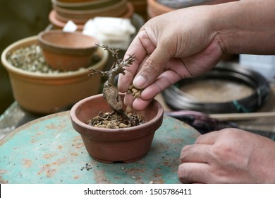 Making of bonsai trees, Sprinkle the soil and rake the soil to tighten the roots, Handmade accessories wire and scissor bonsai tools, stand of bonsai, Concept Bonsai tree.