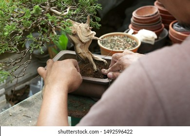 Making of bonsai trees, Wiring a tree into the pot. Handmade accessories wire and scissor bonsai tools, stand of bonsai, Concept Bonsai.