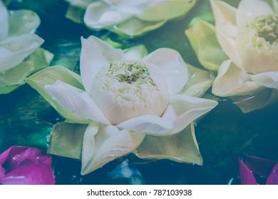 Making decoration lotus flower floating on water