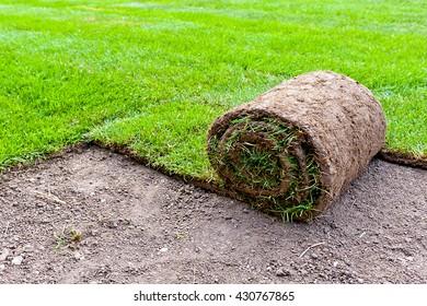 making new lawn using roll grass