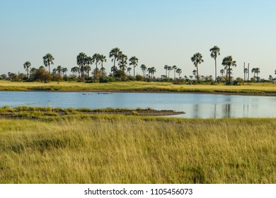 Makulwani palms beside a salt pan filled with water in Botswana's Makgadikgadi Pans National Park