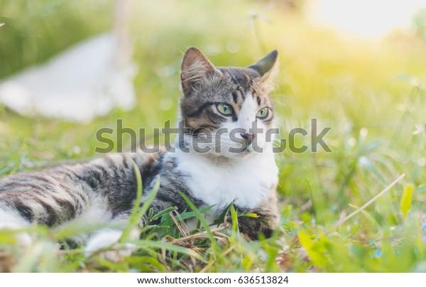 Mal Cat Stock Photo (Edit Now) 636513824
