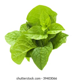 Malabar spinach isolated on white.