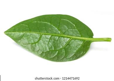 Malabar spinach over white background