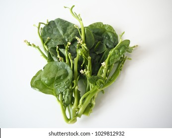 Malabar spinach, Sun-choy, Chinese/Asian vegetable- soft and juicy with white background