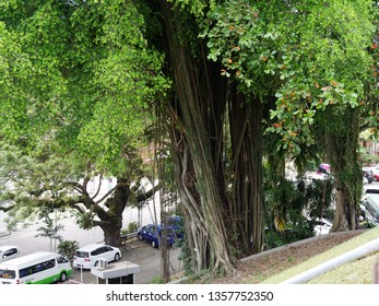 Malacca Tree Images, Stock Photos & Vectors   Shutterstock