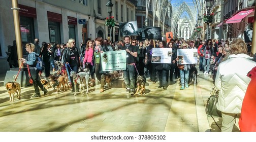 MALAGA, SPAIN - FEBRUARY 01, 2015: Demonstration for the rights of dogs