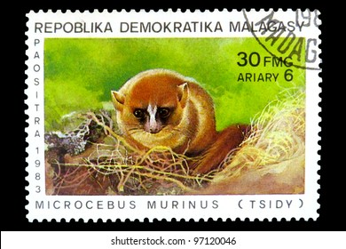 """MALAGASY REPUBLIC - CIRCA 1983: A Stamp printed in Malagasy Republic (Madagascar) shows image of a Lemur with the inscription """"Microcebus murinus (Tsidy)"""", from the series """"Various lemurs"""", circa 1983"""