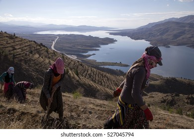 Malatya, Turkey -?? March 18, 2014 : Seasonal workers who come for work to the kale village of Malatya from the different provinces of Kurdistan.