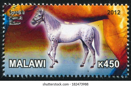 MALAWI - CIRCA 2012: stamp printed by Malawi, shows Spanish Jennet Horse, circa 2012
