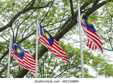 Malaysia Flag also known as Jalur Gemilang waving with the background of Malaysian rainforest trees. In conjunction of Independence Day celebration or Merdeka Day.