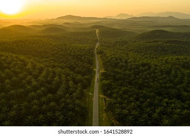 malaysia palm oil plantation with a single road during golden sunrise
