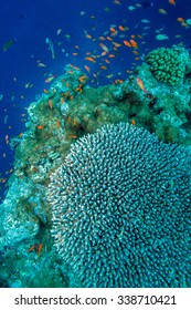 Maldives Colorful Tropical Coral Reef Landscape