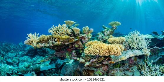 Maldives Coral Landscape