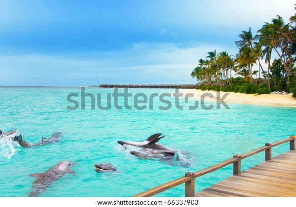 Maldives. Dolphins at ocean and tropical island.
