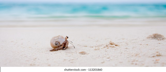 Maldives are full of hermit crabs on the beach which get scared quite easy but if you stay still they come out and start crawling. They are really funny dragging the big seashell behind them