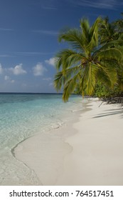 Maldives, North Male Atoll, Island of Kuda Bandos. Palm trees on white sand beach.