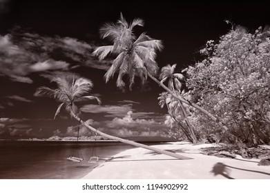 Maldivian dream island with palms, beach, sun and swing. Maldives, Indian Ocean