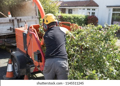 Male Arborist loading branches into an industrial wood chipping machine. The tree surgeon is wearing a safety helmet with a visor and ear protectors