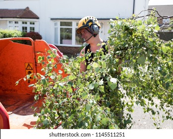 Male Arborist loading small branches into a wood shredding machine.The tree surgeon is wearing a safety helmet with a visor and ear protectors