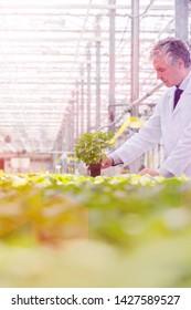 Male biochemist holding seedling in plant nursery