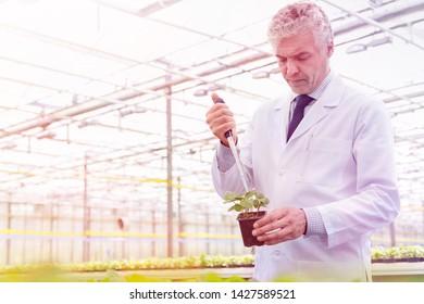 Male biochemist using pipette on seedling in plant nursery