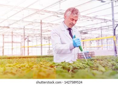 Male biochemist using pipette on herbs in plant nursery