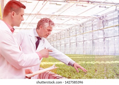 Male biochemists discussing over herb in plant nursery