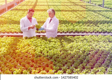 Male biochemists discussing over seedlings while standing in plant nursery
