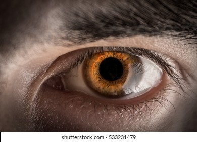 26c03be8950 Grey Eyes Images, Stock Photos & Vectors | Shutterstock
