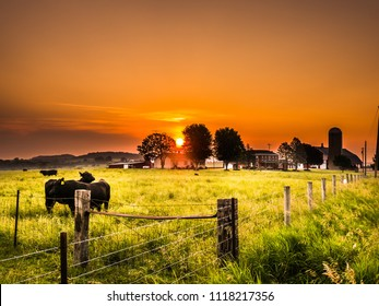 A male bull and female beef cow stand side by side in a fenced in cattle pasture with green grass as the sun rises with beautiful orange colored skies and farm beyond in Galena Illinois.