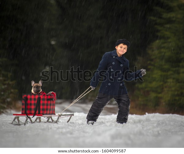 Male child pulling an antique sled with a French Bulldog puppy in the box in winter.