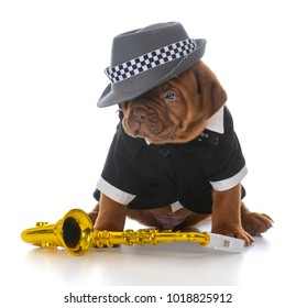 male dogue de bordeaux puppy with saxophone on white background