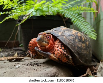 Turtle Eye Images Stock Photos Amp Vectors Shutterstock