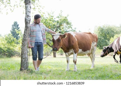 Male farmer checking on his herd on his farm