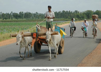 Male farmer driving ox cart in Southern India through rural landscape