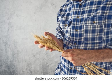 Male Farmer holding wheat straws. Agricultural Crop protection concept.