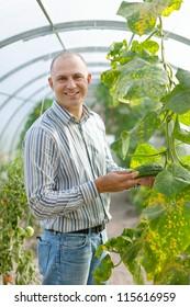 Male farmer looks cucumbers plant in greenhouse