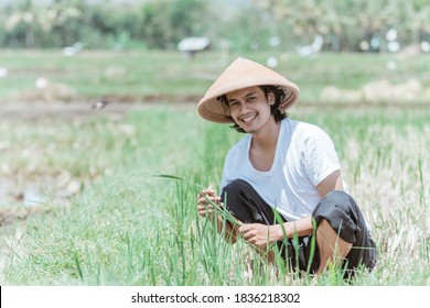 The male farmer smiles looking at the camera wearing a hat while squatting in the rice fields