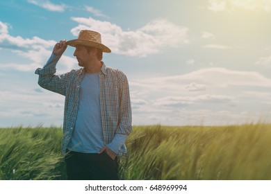 Male farmer walking through a green wheat field on windy spring day and examining cereal crops