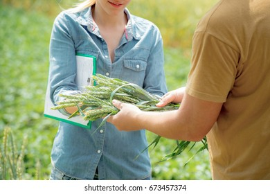 Male and female agronomist negotiating about future crop of wheat, at the wheat field